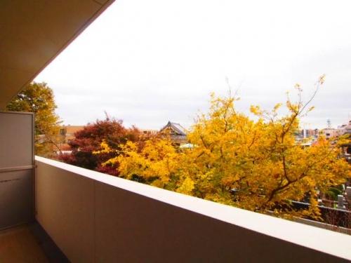 2階ですが、開放的な景色です。
